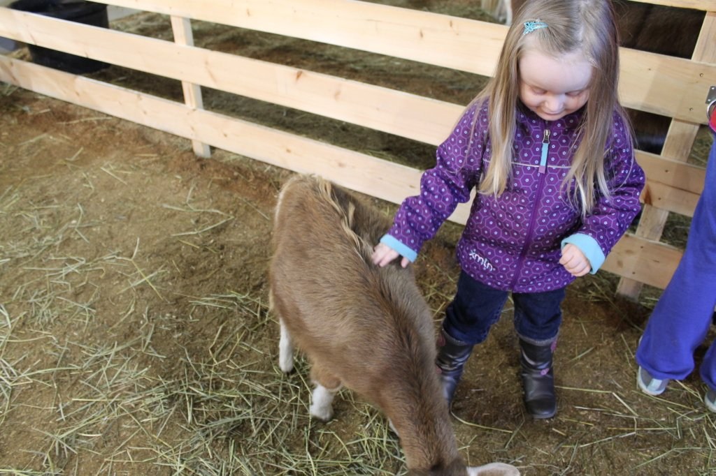 timberline ranch petting zoo